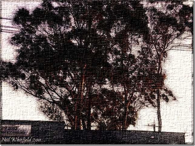 FotoSketcher - CIMG6035